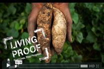 Blog Action Day: Growing a better future with sweet potatoes