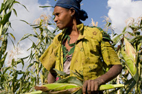 What the Global Food Security Act of 2013 can do for agriculture development