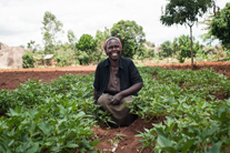 Follow Kenyan farmer Anne from planting to harvest