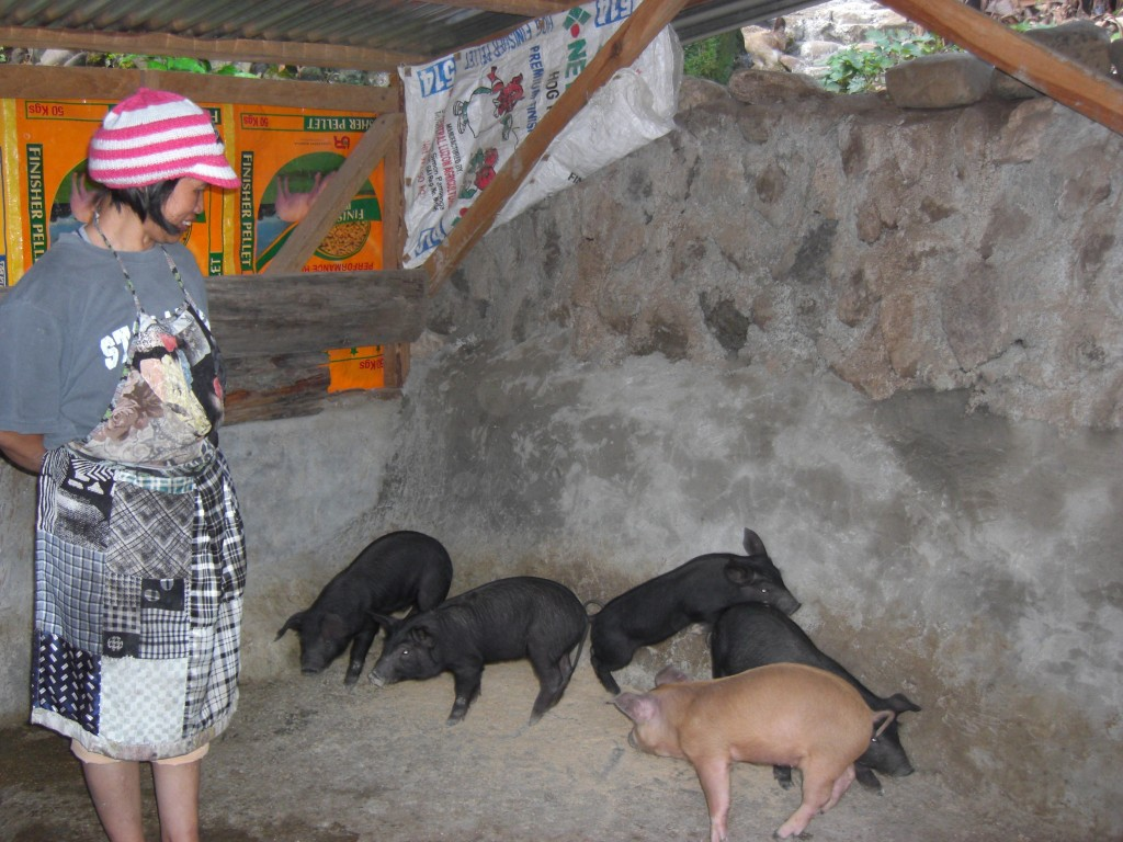 Jane and her two piglets. Credit: Heifer International