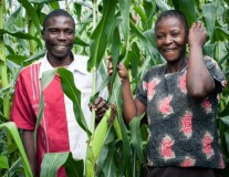 The hunger season hits Kenya as David & Zipporah wait for their harvest