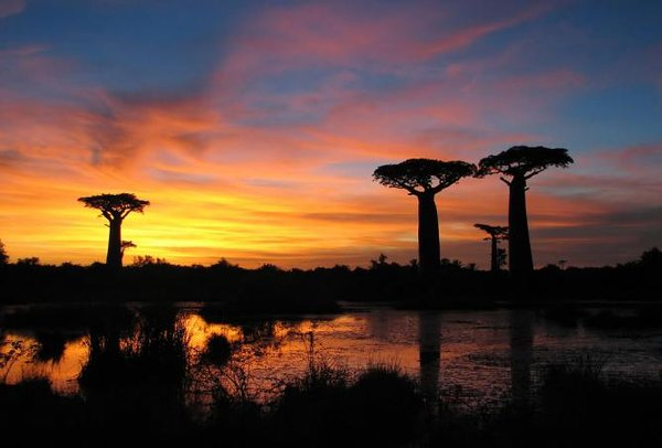 rsz_56-199801-1024px-sunset-baobabs-madagascar