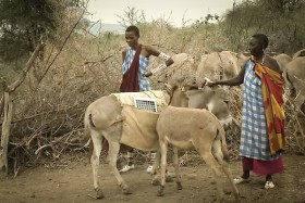 Masai Women Are Leading a Solar Revolution With Help From Their Donkeys