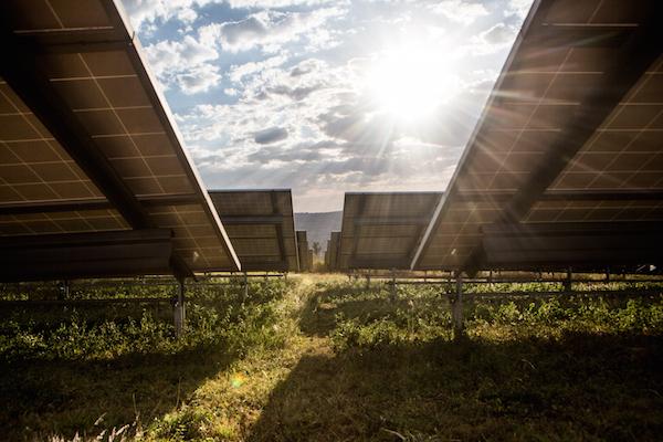 Solar panels at the Gigawatt Global Solar Field. Photo credit: Jonx Pillemer