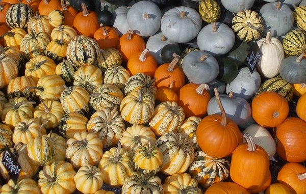 rsz_pumpkins3