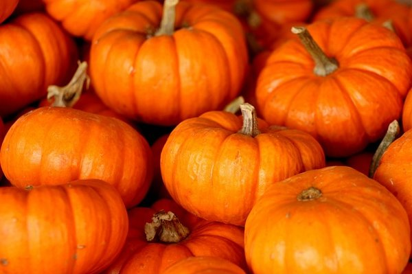 The Power Of The Pumpkin In Uganda One