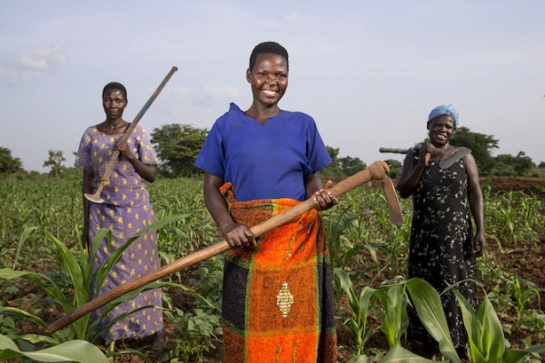 Women from the Self Help Group Alita Kole in Ayala, Uganda, taking care of their crops that they own together as a group. This gardening activity is part of an income generating activity supported by Reproductive Health Uganda. (Photo credit: Jonathan Torgovnik/Reportage by Getty Images)