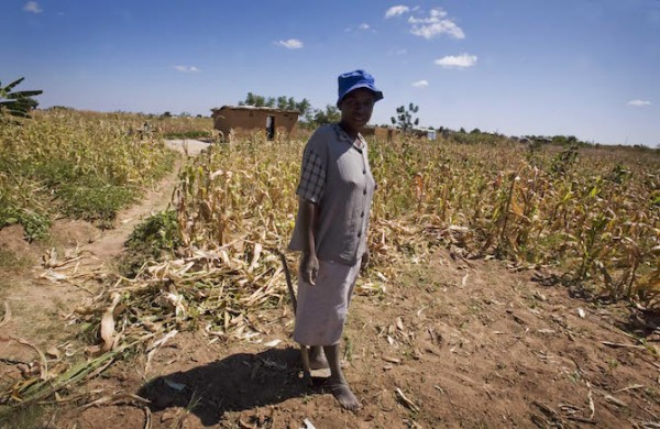 A woman stands in her crop of maize that grows around her home in Harare, Zimbabwe, in 2009. (Photo credit: Kate Holt/AusAID)